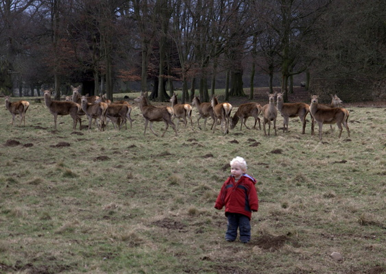Callum with Deer at Studley Royal, 26th February 2012