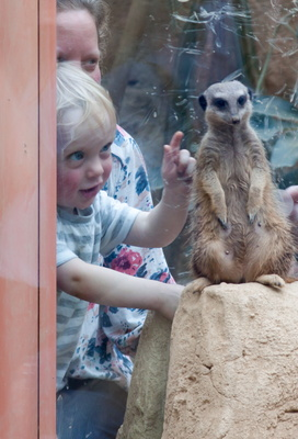 Alastair and a meerkat